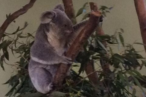 シドニー動物園1